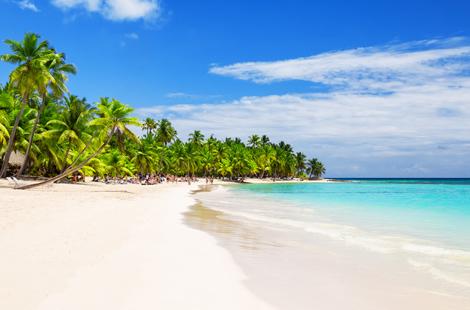 Kokosnuss Palmen am weißen Sandstrand in Miami