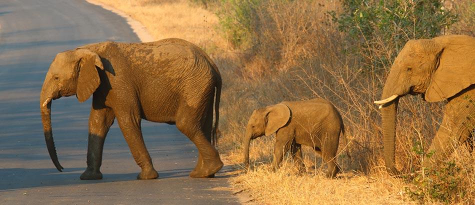 Safari in Addo Park