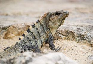 Iguana Cancun Flughafen