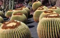 Lanzarote Kaktusgarten in Guatiza